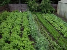 Northern Vegetable Gardening - How to Start a Vegetable Garden -  this garden is so tidy!