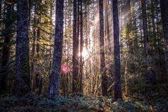 Sunlight through trees at Gifford Pinchot National Forest Washington [20481365] [OC] #reddit