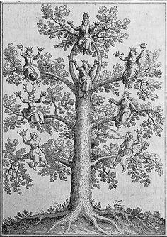 File:Anatomia auri - opus magnum.jpg