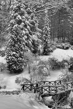 Biltmore Estate in snow ... Feb. 2014