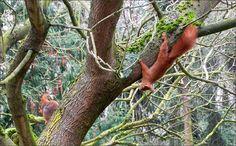 Zwei Eichhörnchen - Jahreszeiten - Galerie - Community