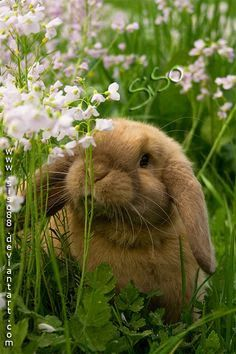 Bunny in the meadows