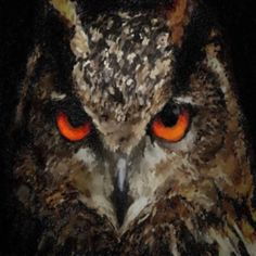 Eurasian Eagle Owls; Information, Pictures and Conservation