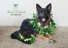 This would have been a lot of fun for our wedding! DIY: Floral Wreath for your Dog