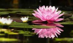 Resultado de imagen para plantas acuaticas