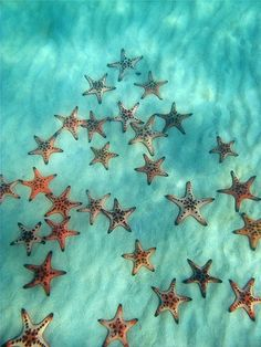 Starfish in the clear blue sea Summer Vibe, Summer Surf, Wale, Ocean Creatures, Tier Fotos, Am Meer, Sea World, Ocean Life, Marine Life