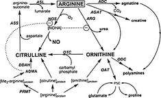 l-Arginine is one of the most metabolically versatile amino acids. In addition to its role in the synthesis of nitric oxide, l-arginine serves as a pr… L Arginine, Chronic Fatigue Syndrome, Adrenal Fatigue, Ibs, Amino Acids, Metabolism, Natural Health, Anti Aging, Positivity