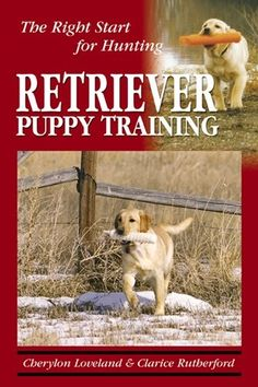 Retriever Puppy Training The Right Start for Hunting -- Visit the image link more details. (Note:Amazon affiliate link)