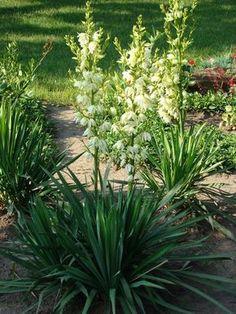 Creepers, Garden Plants, Shrubs, Flora, Patio, Green, Gardening, Recipes, Ideas
