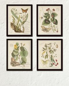 VINTAGE BUTTERFLY AND BOTANICAL ORIGINAL COLLAGE PRINT SET - 4 GICLEE CANVAS PRINTS  These vintage butterfly and botanical illustrations have been been digitally enhanced and restored to bring out their depth of color and detail.The images also include elements of French Ephemera and have been added to a an aged rustic vintage background which retains some of the original imperfections of a time worn patina adding to their vintage charm.  A picture of the background is also displayed along…