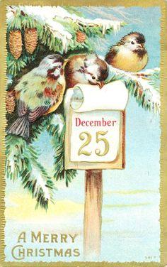 Cartão postal com pássaros no Natal. 1900s