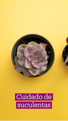Potted Plants, Garden Plants, Indoor Plants, House Plants, House Plant Care, Home Vegetable Garden, Succulent Care, Little Plants, Green Life