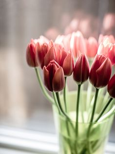 Mmm... Beautiful photo, beautiful flowers