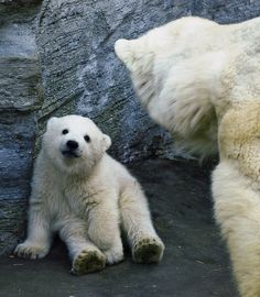 """polar bear baby"" photographed by miezbiez"