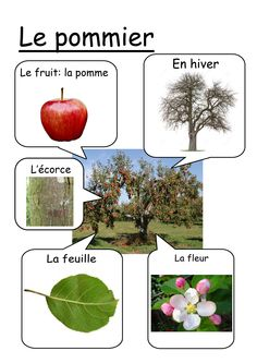 Fiche pommier                                                       … French Education, French Classroom, Apple Theme, French Teacher, Montessori Activities, Montessori Materials, Teaching Biology, Forest School, Learn French