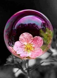 Macro Photography, Creative Photography, Photography Flowers, Bubble Photography, Fotografia Macro, Blowing Bubbles, Soap Bubbles, Dew Drops, Water Droplets