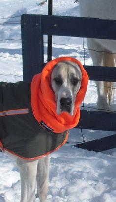 Great Dane Apparel - Tootlewear Dog Apparel