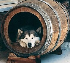 wonder if our dogs would use this if we went to the trouble of doing it? barrel made into a kennel
