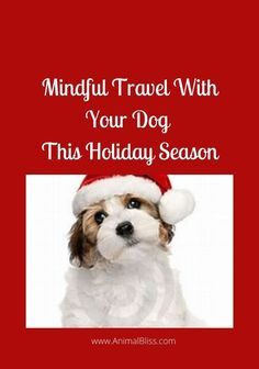 Travel with your pet doesn't have to be difficult. With a little planning, mindful travel with your dog this holiday season can be a breeze. Dog Training Books, Group Of Dogs, Cute Dog Photos, Dog Anxiety, Dog Travel, Love People, Dog Walking, Dog Care, Dog Friends