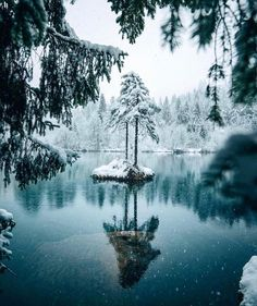 Our definition of freedom. Floating Fireplace, Holiday Hotel, Hiking Tours, Cool Christmas Trees, Winter Landscape, Summer Activities, Christmas Inspiration, Winter Wonderland, Photo Wall