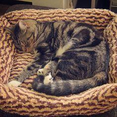 おやすみなさーい #ねこ #ねこさん #もふもふ #ねこもふ団 #猫好き #愛猫 #猫部 #ねこばか #catlover #lovecats #catoftheday #kitty #catofinstagram #cat #nekostagram #nyanstagram