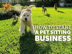 How to Start A Pet Sitting Business | This post details the elements every pet…