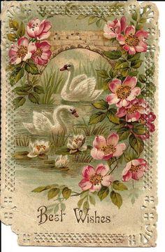 Antique Postcard Swans  & Roses