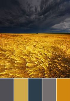 '' Storm clouds brewing over a wheat field (via Katherine Bond) '' # Beautiful nature photography # All Nature, Amazing Nature, Flowers Nature, Natural Scenery, Natural Colors, Storm Clouds, Mellow Yellow, Grey Yellow, Yellow Shades