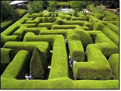 Lose yourself in the Ashcombe Maze & Lavender Gardens at Mornington Peninsula, Victoria. Australia's most famous three-metre high hedge maze and lavender labyrinth. Formal Gardens, Unique Gardens, Amazing Gardens, Beautiful Gardens, Garden Shrubs, Shade Garden, Landscape Design, Garden Design, Amazing Maze