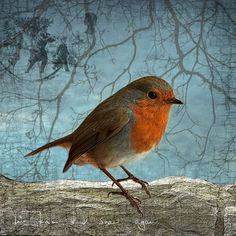European Robin Redbreast on a Sky Blue Background with Winter Branches and Postmark - Signed Fine Art Photograph