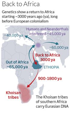 Humanity's forgotten return to Africa revealed in DNA - life - 03 February 2014 - New Scientist #HumanMigration