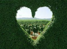 heart hedges