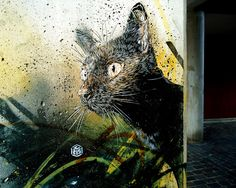 by French artist Christian Guémy aka C215 seen on the streets of Barcelona and Berlin.