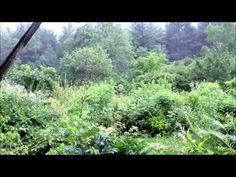 Rainy Day on Tasha Tudor's Porch July 2013