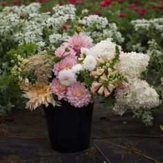 Right now it's Blush. We offer bulk buckets of blooms for weddings and events, all harvested from our farm. Shown here is a bucket our customers couldn't get enough of last year. 'Custom colour palette harvest' in Blush from August. Diy Wedding, Wedding Flowers, Wedding Ideas, September Flowers, Flower Farm, Natural Looks, Buckets, Dahlia, Spring Time
