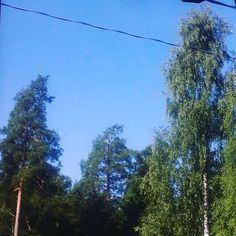 Birch, Pine trees, blue sky and telephone wires; the first thing I see every morning. Well, for a few days in the summer at least! #hereandnow #forest #woods #hellosummer #goodmorning #bedroomwindow #trees #birch #pinetree #bluesky #sky #weather #nature #finland #cantcomplain #visitfinland #weareinfinland #summer #nice #instasummer #instalike #instatrees #instanature #instamood #goodvibes #instagood #instamorning #goodmorningfinland #raseborg #kariskarjaa