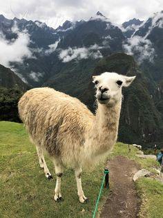 31 Fun Fast Facts about Peru