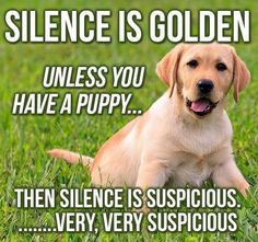 How true this is! Never name a puppy after the God of mischief! She'll take it as a challenge.