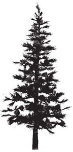 Rubber Stamp PINE TREE