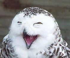Eu quero sorrir o teu riso!