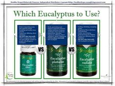 Every wonder what is the difference between eucalyptus radiata, blue, and globulus?