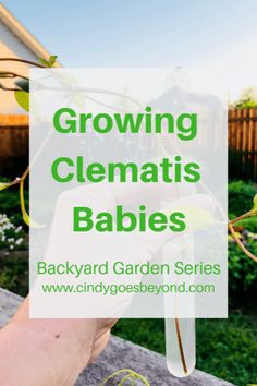 Growing Clematis Babies - Cindy Goes Beyond