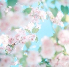 Image uploaded by 𝓈𝒶𝓂𝒶𝓃𝓉𝒽𝒶 𝓈𝑒𝓇𝑒𝓃𝒶 ✰. Find images and videos about photography, pretty and nature on We Heart It - the app to get lost in what you love. Flower Screensaver, Beautiful Flowers, Beautiful Pictures, Religion Catolica, Japanese Photography, Summer Memories, Everything Pink, World Of Color, Aesthetic Pictures