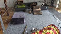 Rabbit, Home Appliances, House, Ideas, Bunny, House Appliances, Rabbits, Home, Bunnies