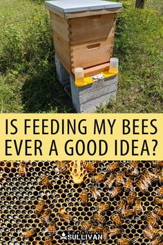 You should avoid feeding your bees unless absolutely necessary - otherwise you'll do more harm than good. Bee Syrup, How To Start Beekeeping, New Beehive, Feeding Bees, Backyard Beekeeping, City Farm, Urban Homesteading, Things To Come, Good Things