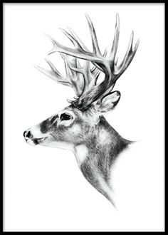Deer black and white, plakat. I Desenio finder du flotte plakater og plakater… Deer Head Tattoo, Head Tattoos, Art And Illustration, Illustrations And Posters, A4 Poster, Birds And The Bees, Black And White Posters, Inspirational Posters, Picture Wall