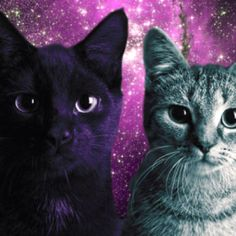 Cats in space:)