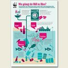 Infografik: Wie gelangt der Müll ins Meer? © WWF