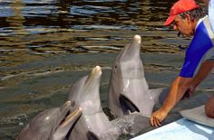 Dolphin time in the Florida Keys