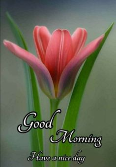 Good Morning Images Flowers, Good Morning Beautiful Images, Good Morning Inspiration, Morning Pictures, Good Morning Friends, Good Morning Messages, Good Morning Wishes, Good Morning Quotes, Color Wallpaper Iphone